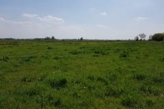 Grünland westlich der Mühlenbarbeker Au, nördliche Teilfläche