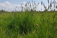 Grünland westlich der Mühlenbarbeker Au, südliche Teilfläche